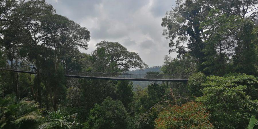 Penang Hill - The habitat
