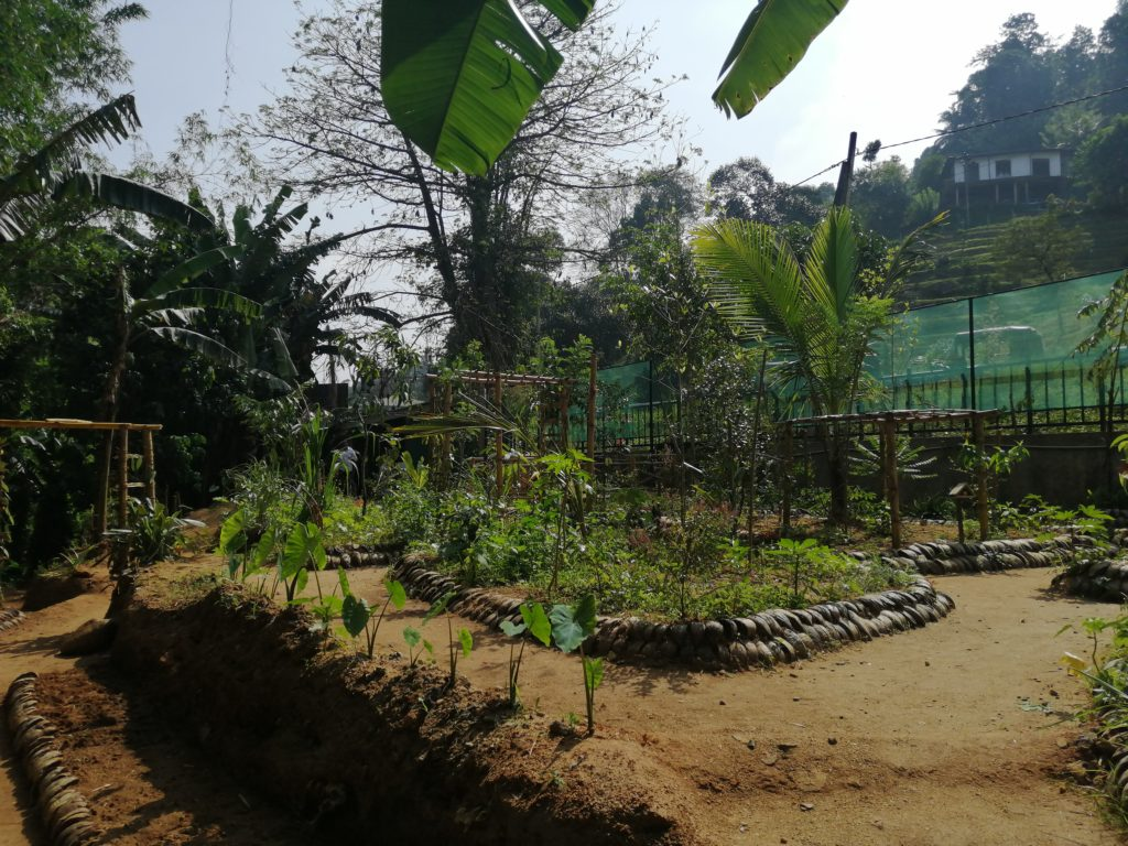 Jardin ayurvédique