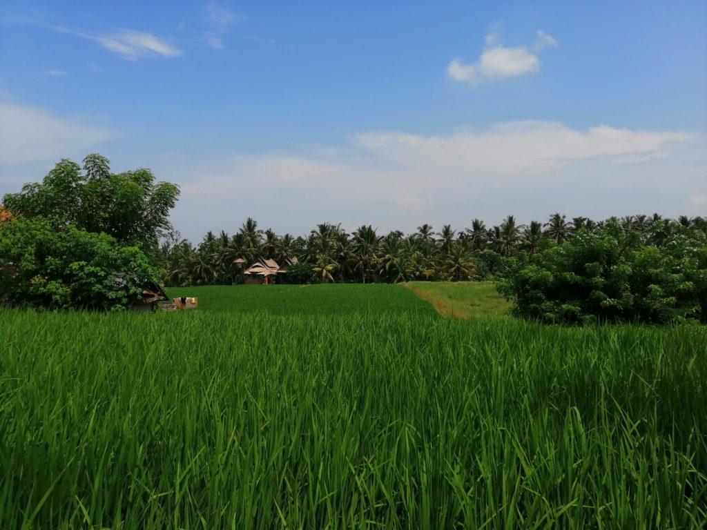 Kajeng Rice Fields Walk