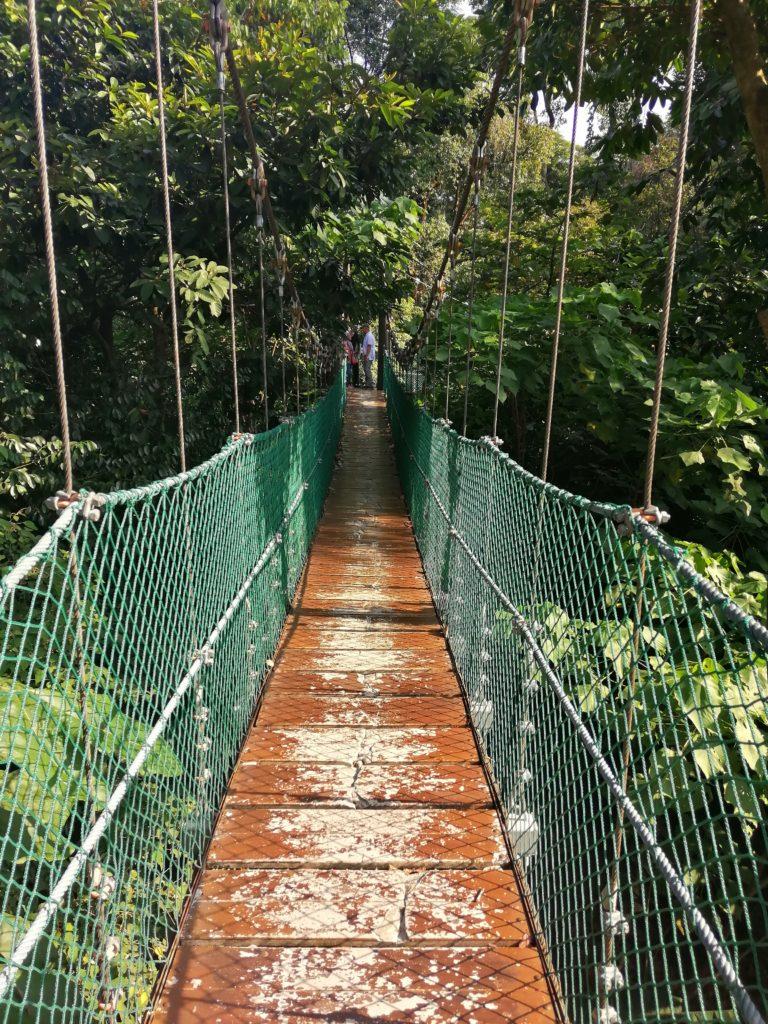 Kuala Lumpur Forest Eco Park