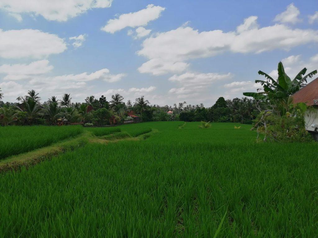 Balade dans les rizières à Bali