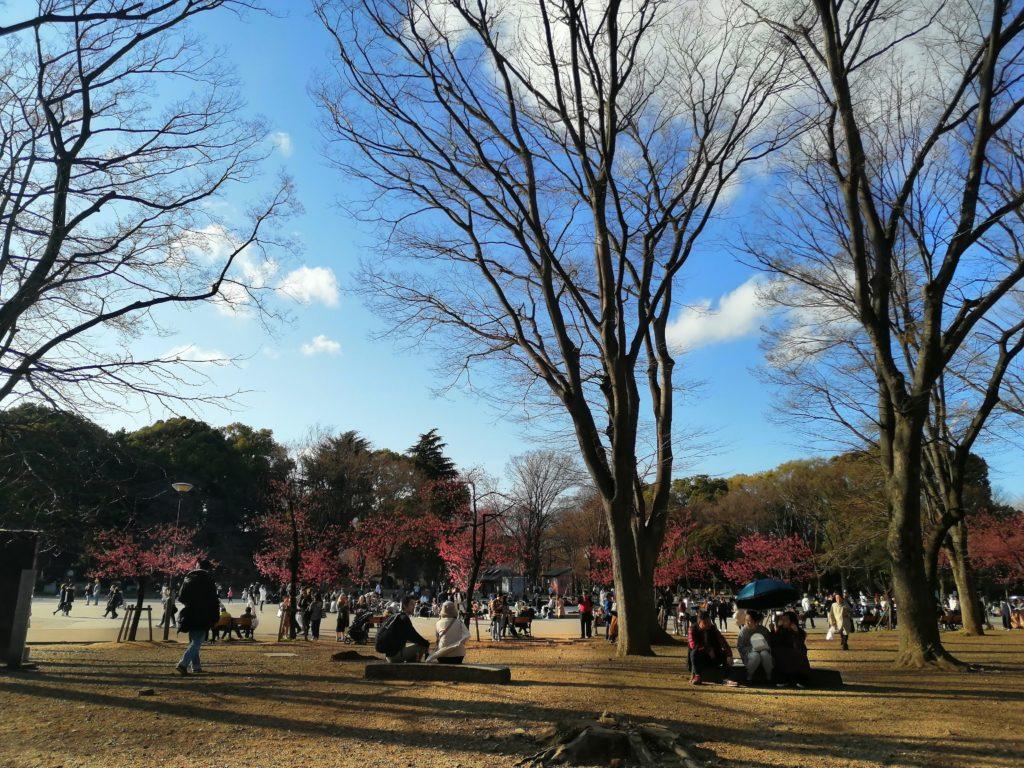 Saison des Sakura - Quand partir au Japon