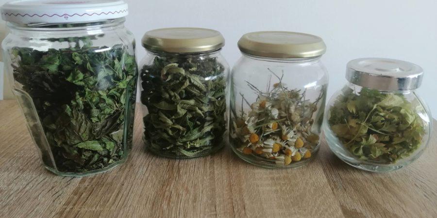 Infusions de plantes pour l'hiver
